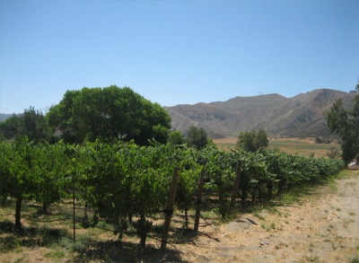 Wineries and Vines